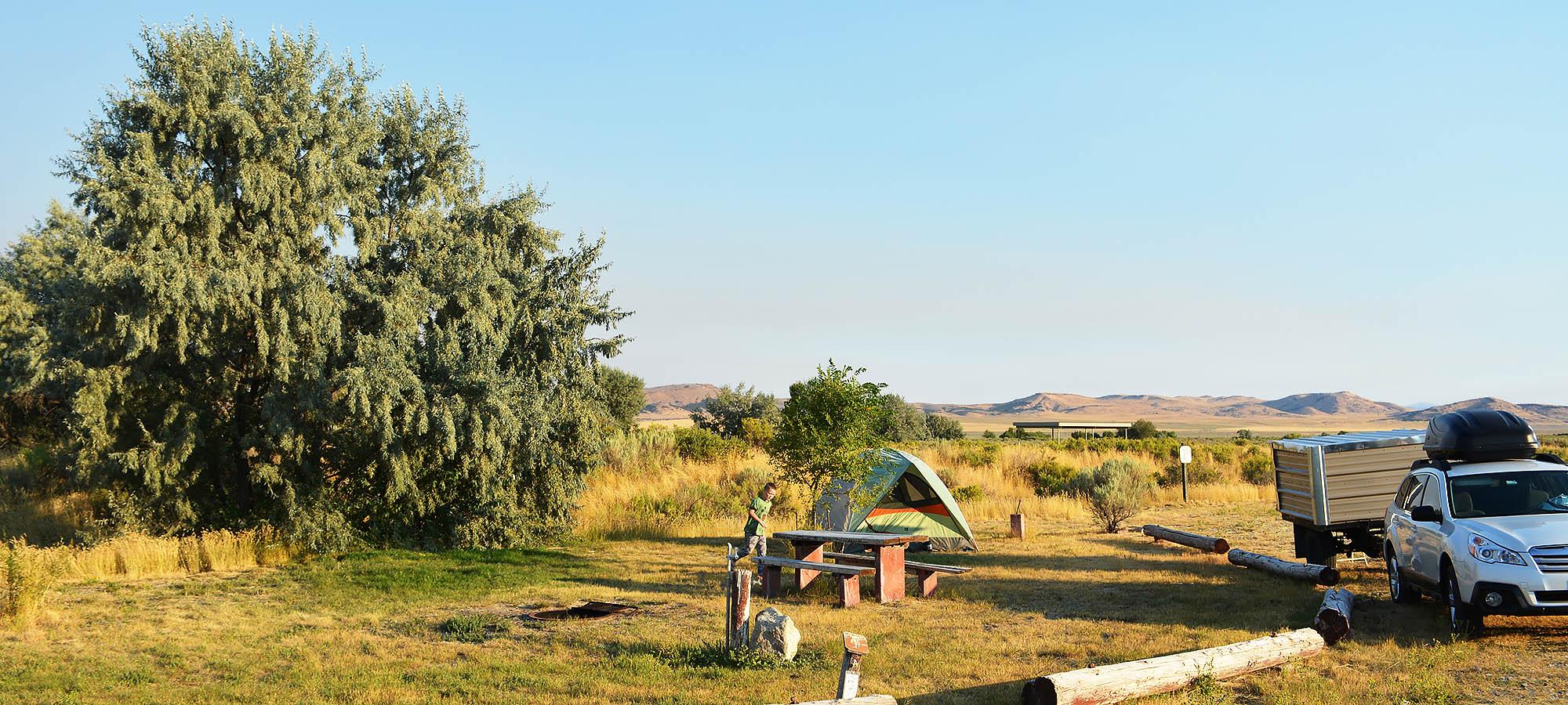 Curlew Grasslands